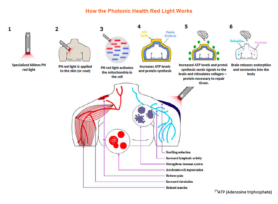 Red Light Therapy Infographic